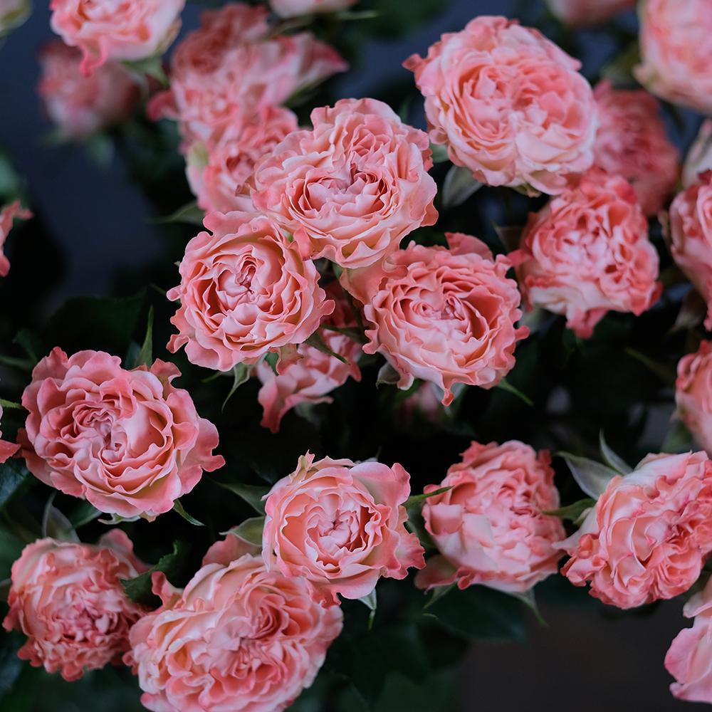 Розы кустовые Fair Flow
