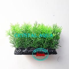 Растение Атман PP-137C, 10см