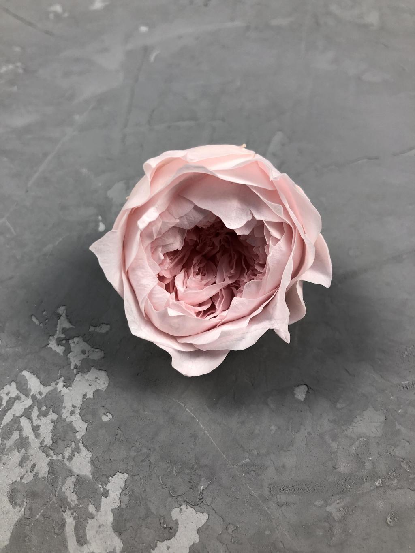Роза пионовидная нежно-розовая d=4,5 см