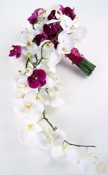 букет невесты орхидея фалинопсис 45 тыс тг