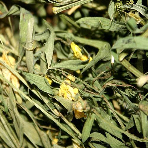 Травы Чина луговая lathyrus-blossom-613.jpg
