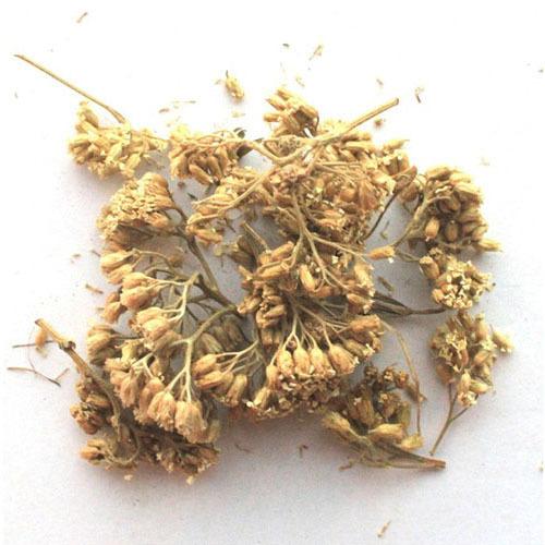 Травы Шандра обыкновенная marrubium-620.jpg