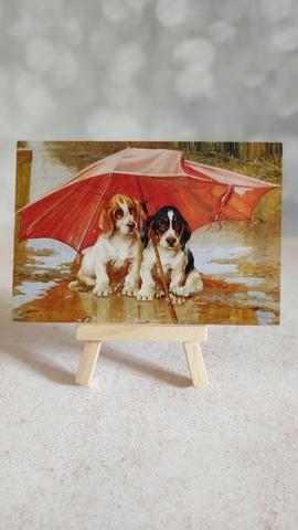 Щенки под зонтиком