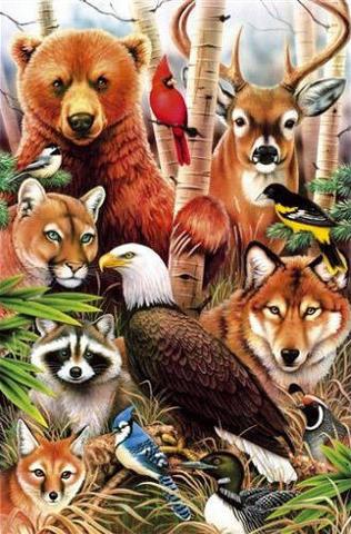 Картина раскраска по номерам 30x40 Животный мир