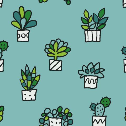 Домашние цветы и растения
