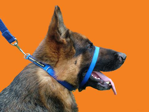 Ошейник Canny Collar- сдерживающий тянущую собаку, размер 6 (48CM - 64CM) , цвет синий