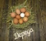 Яйцо куриное домашнее 10 шт. от Ольги Веселовой