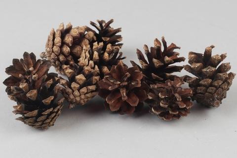 Шишки сосновые натуральные, размер: 4-5см (упаковка 10 шт.)