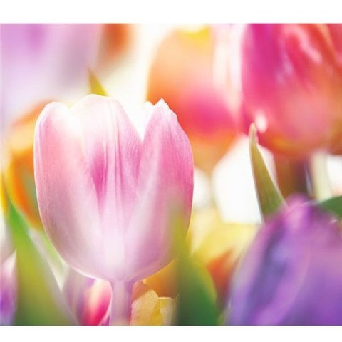 Цветущая весна - тюльпаны 294x260 см