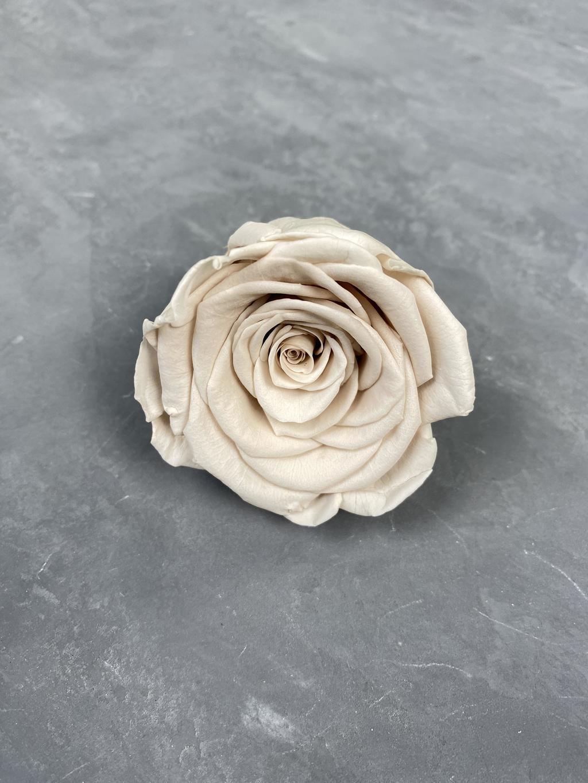 Роза классическая пыльно-коричневая d=5,5 см