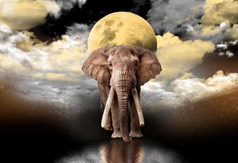 Мечты слона (Wooden City)