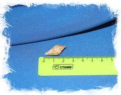 Конус праецелленс (Conus praecellens) размер