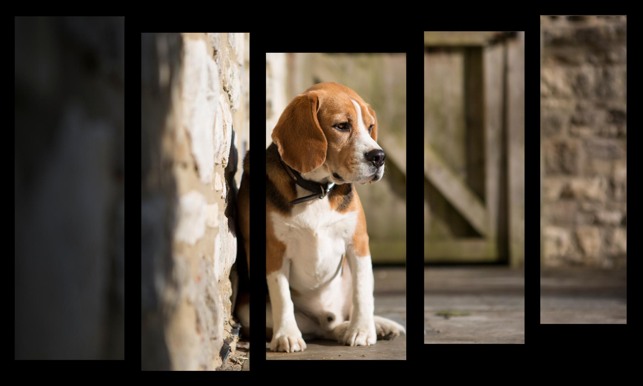 """Животные Модульная картина """"Грустная собака"""" М1027_M_загибы_100х65.png"""