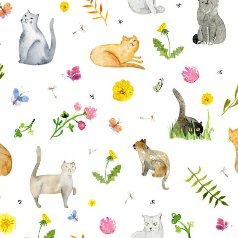 Луговые коты на белом фоне