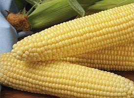 Кукуруза Шайнрок F1 семена кукурузы (Syngenta / Сингента) Шайнрок_F1_семена_овощей_оптом.jpg