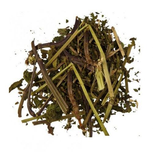 Травы Яснотка lamium-649.jpg