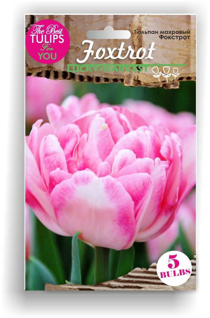 Тюльпан Махровыей ранний Foxtrot (Фокстрот) Украина 5 шт