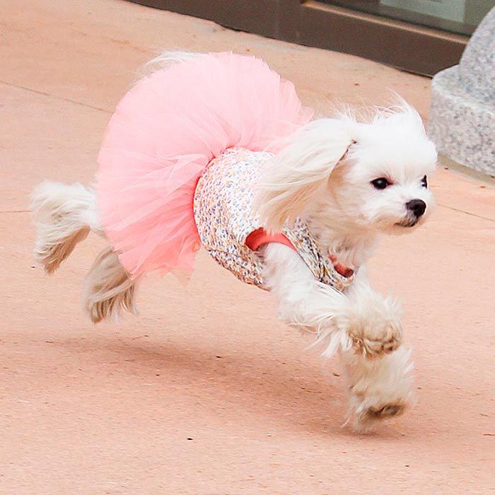 платье для мальтезе с пышной юбкой