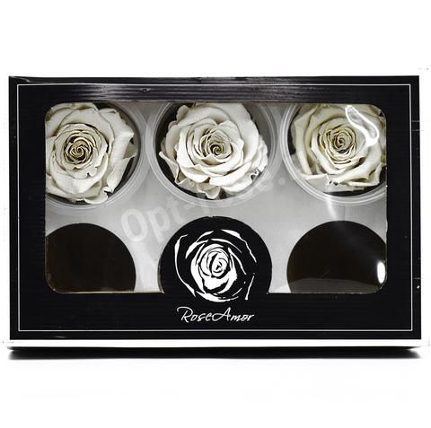 Стабилизированный Бутон Розы Rose Amour XL. Цвет Белый (Диаметр 6-7см)