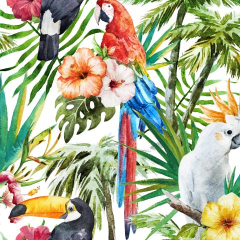Tropics and Birds