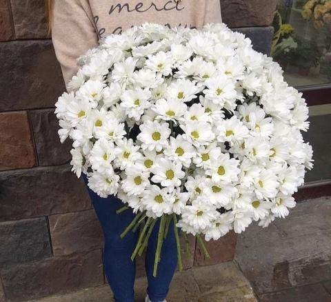 25 кустовых хризантем #2759