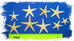 Сахарные морские звездочки 5 - 7 см 50шт.