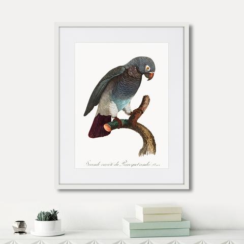 Джон Гульд - Beautiful parrots №6, 1872г.