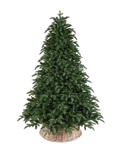 Triumph tree ель Нормандия пушистая 1,55м темно-зеленая
