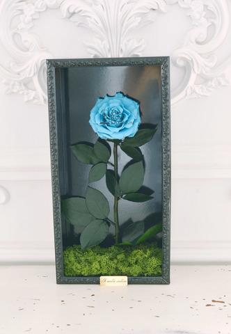 Стабилизированная Роза в Картине Premium Оптом Размер*Бутон (44х22х8см*11см) Цвет голубой