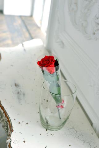 Роза на стебле Premium Оптом Высота*Бутон (37см*5-6см) Цвет красная