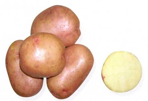 Картофель семенной Хозяюшка СЭ 28/55 уп.2кг