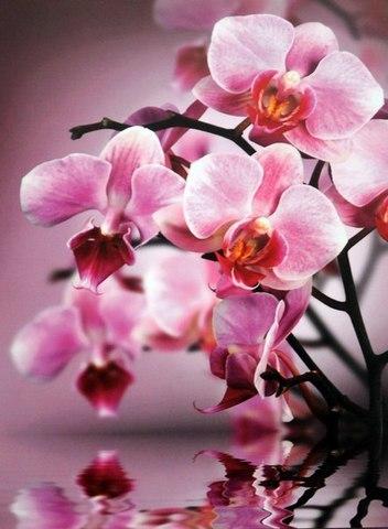 Изящность - орхидеи 196x260 см