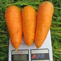 Болтекс семена моркови курода/шантане (Clause / Клос)