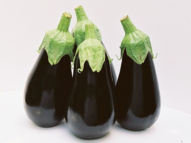 Баклажан Блек перл F1 семена баклажана (Enza Zaden / Энза Заден) Блек_перл_F1_семена_овощей_оптом.jpeg