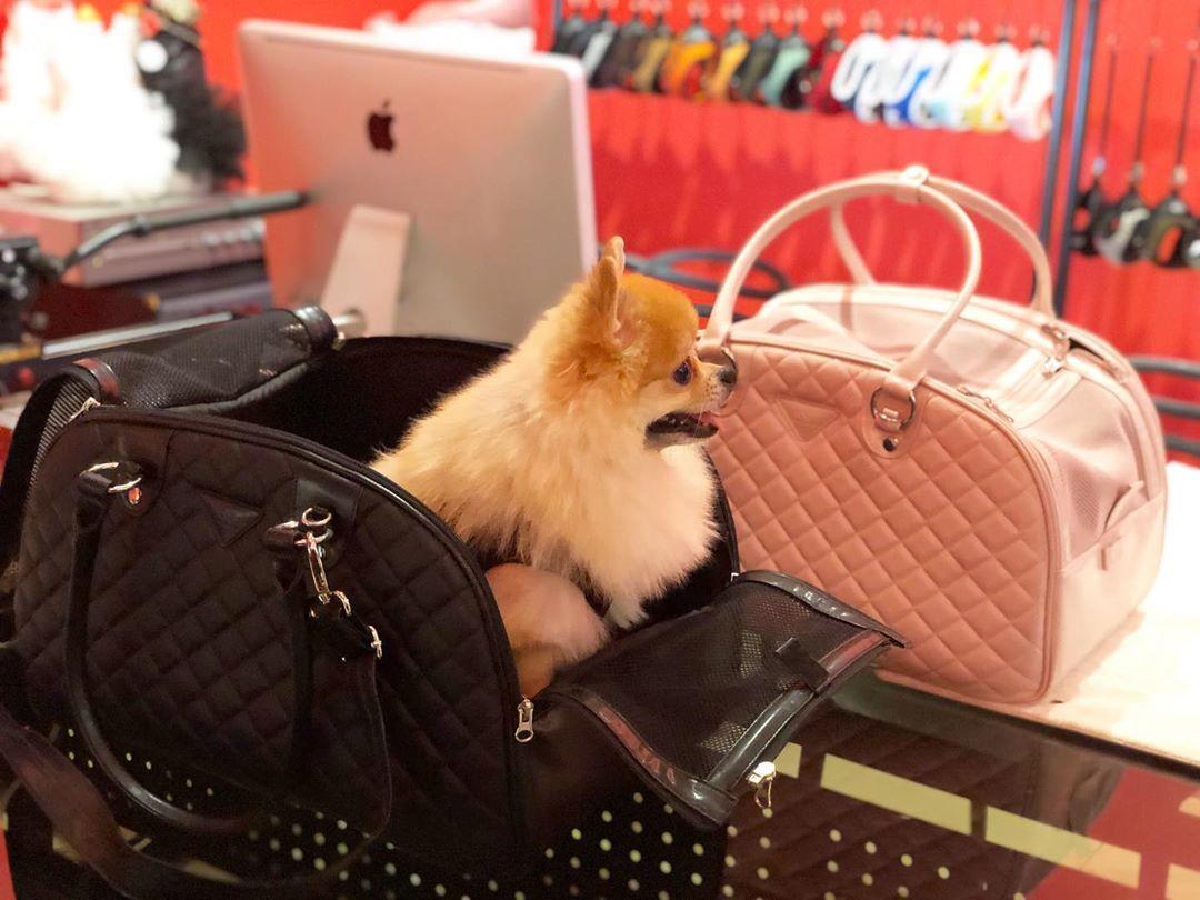купить переноску для собаки для самолета
