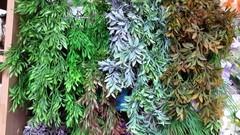 Ива свисающая трава искусственная, букет 6 веточек, 56 см.