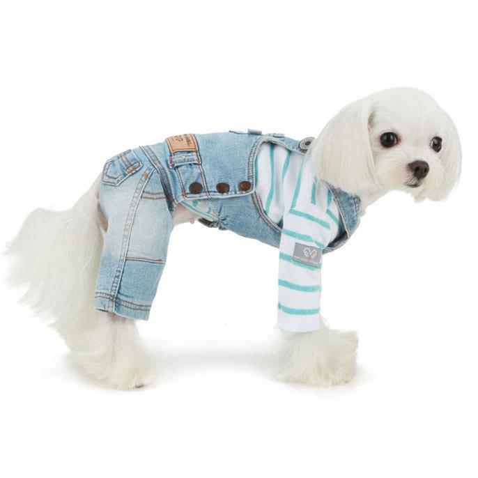 джинсы для мальтезе
