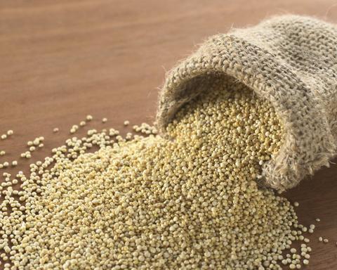 Горчицы белой семена для проращивания