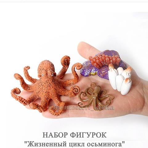 НАБОР ФИГУРОК «Жизненный цикл осьминога»