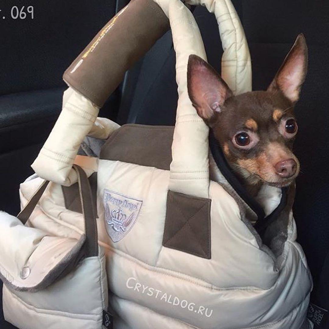 зимняя сумка для той терьера