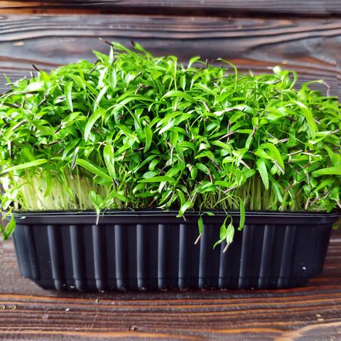 Фотография Дикая петрушка (кервель) на корне (лоток) / 30 гр купить в магазине Афлора
