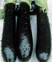 Валентина F1 семена баклажана (Seminis / Семинис)