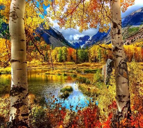 Алмазная Мозаика 40x50 Озеро в лесу у гор (арт. HWA3274 )