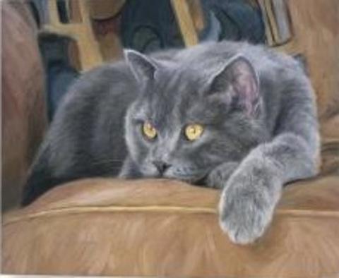 Алмазная Мозаика 40x50 Серый кот отдыхает на диване