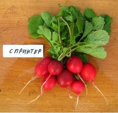 Спринтер семена редиса (Гавриш)
