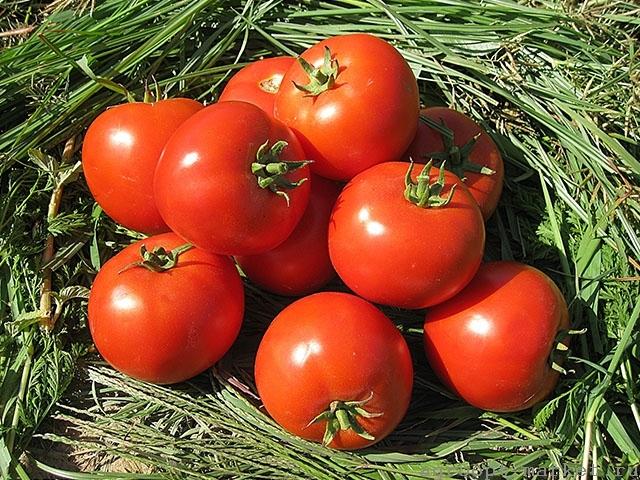 Красный Асалет F1 семена томата детерминантного (Enza Zaden / Энза Заден) асалет.jpg