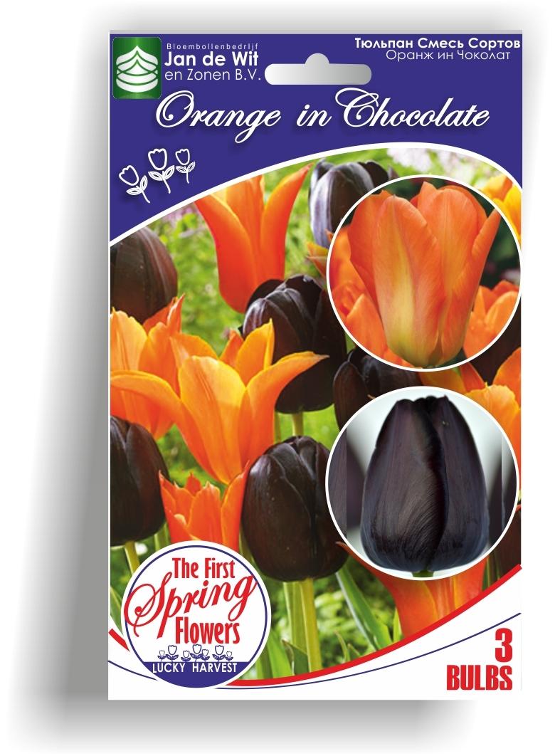 Луковицы Тюльпана Смесь Orange in Chocolate (Оранж ин Чоколат)  TM Jan de Wit en Zonen B.V. (количество в упаковке 3 луковицы)