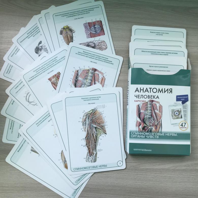 Каталог Анатомия человека. Спинномозговые нервы и органы чувств (47 карточек) 5b62156bbd36c03ba17dba82.jpg