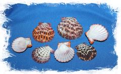 Морские ракушки для рукоделия