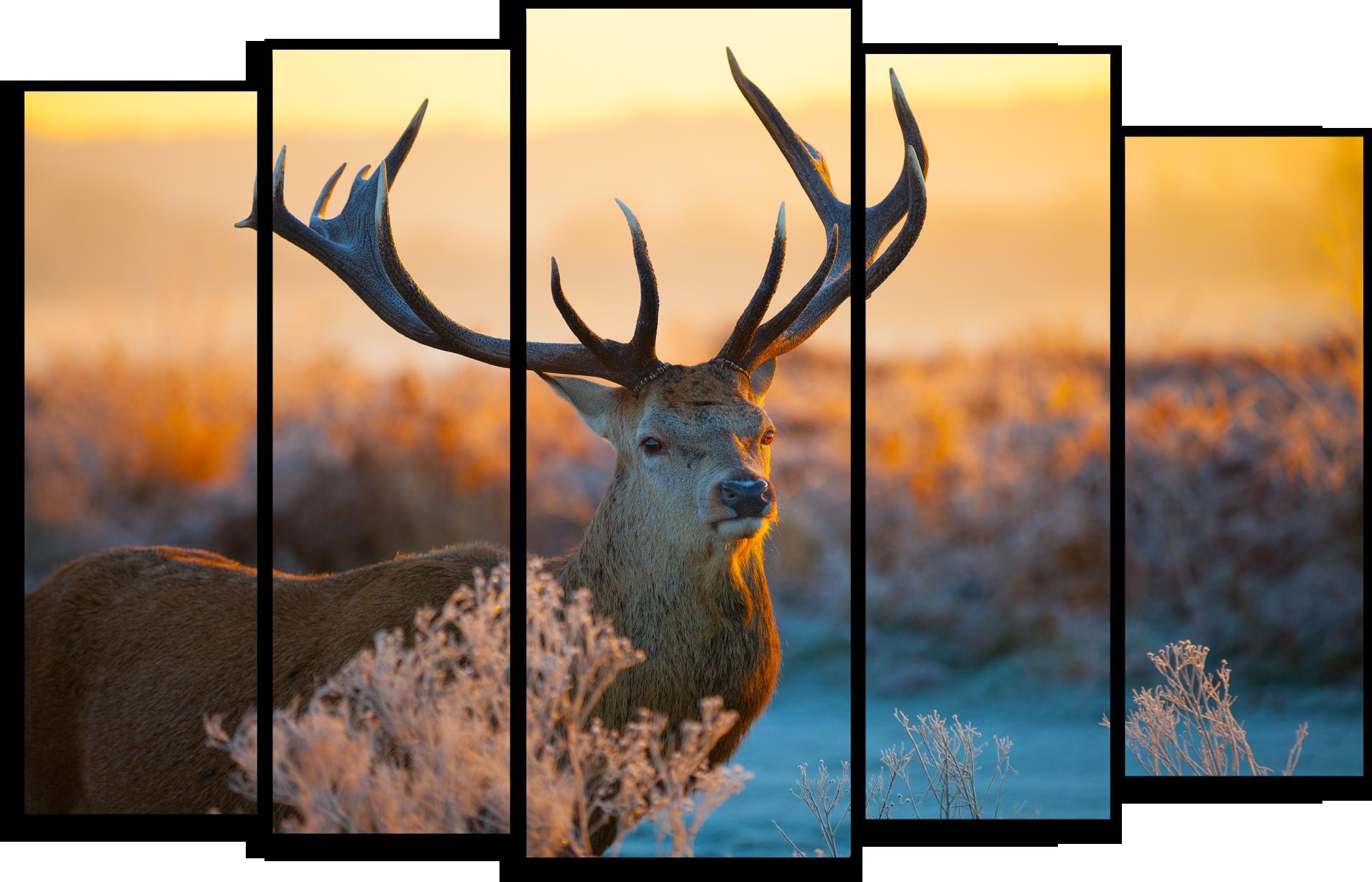 """Животные Модульная картина """"Задумчивый олень"""" М420.png"""